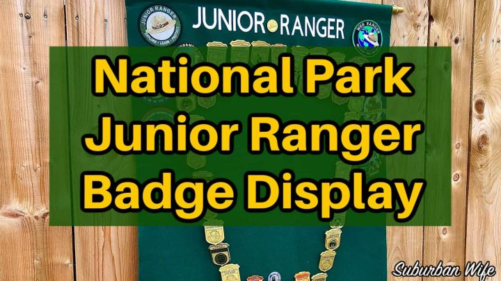 NPS Junior Ranger Badge Display